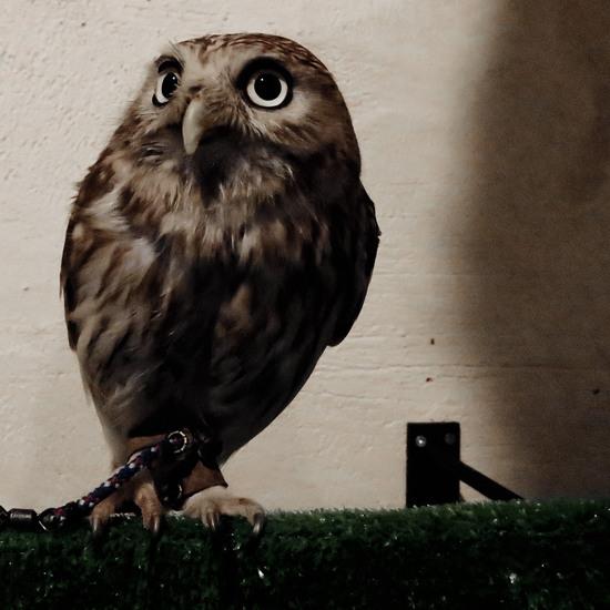 BIRD_CAFE_001.jpg